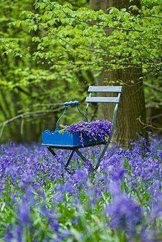 Love lavenders!