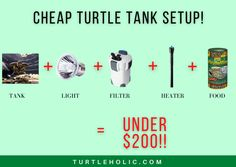 This article shows a bunch of cheap supplies for a turtle tank. With this setup, you can have a cheap turtle tank setup for under $200. This includes a turtle tank, light for turtle tank, filter, heater, and turtle food. Turtle Care, Pet Turtle, Turtle Tank Setup, Filter, Pie, Food, Torte, Cake, Fruit Pie