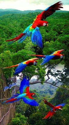Natural therapy for everyone: For burn – Parrot Tropical Birds, Exotic Birds, Colorful Birds, Exotic Pets, Beautiful Nature Pictures, Most Beautiful Birds, Beautiful Creatures, Animals Beautiful, Cute Animals