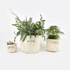 Puebco Canvas Pot Cover Set Of Three - Off White (Image 1)