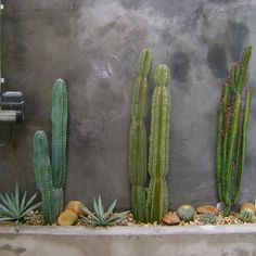 Other Environments by Arquitetura - Viva Decora - Other Environments by Arquitetura – Viva Decora You are in the right place about Cactus maceta - Outdoor Plants, Outdoor Gardens, Cactus House Plants, Garden Cactus, Cacti, Cactus Flower, Landscape Design, Garden Design, Dry Garden