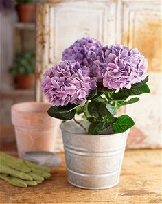 Bring outside flowers indoors - To successfully bring garden plants indoors, she says to choose varieties that prefer low light, like those found in the shade section of your local gardening center. Then select a container with good drainage and put a layer of pebbles mixed with a tablespoon of activated charcoal at the bottom before adding potting soil. This will keep the water from becoming boggy and rotting the plant's roots.