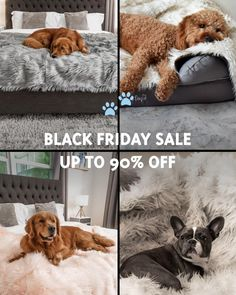 Super Cute Puppies, Cute Dogs, Animals And Pets, Cute Animals, Yorky, Dog Blanket, Dog Items, Dog Paws, Pose