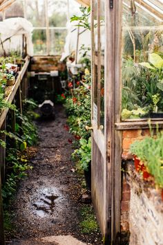 INSPIRING GARDENS - GREAT DIXTER IN EAST SUSSEX - Lobster and Swan Glass House Garden, Home And Garden, Lob, Greenhouse Plants, Greenhouse Ideas, Glass Building, East Sussex, Winter Garden, Beautiful Gardens