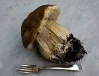 How to Gather Wild Mushrooms without damaging mycelium and future growth.