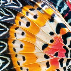 How gorgeous! A butterfly wing close up.The Most Beautiful Book of 2016 is 'Patterns in Nature' How gorgeous! A butterfly wing close up.The Most Beautiful Book of 2016 is 'Patterns in Nature' Patterns In Nature, Textures Patterns, Nature Pattern, Art Patterns, Natural Form Art, Natural Forms Gcse, Natural Structures, Butterfly Wings, Butterfly Wing Pattern
