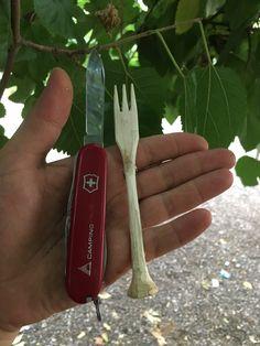 Victorinox Pocket Knife, Bushcraft Camping, Swiss Army Knife, Edc, Knives, Survival, Guns, Medium, Book