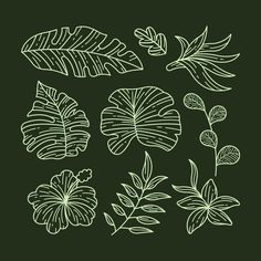 Download Tropical Flower And Leaf Collection Design for free