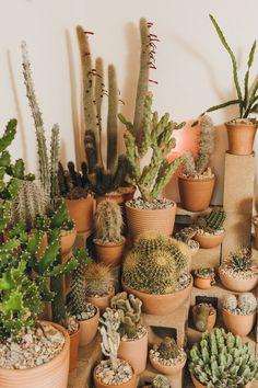 Hot Cactus LA