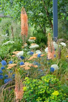 "Foxtail Lilly ""Cleopatra"", Common Yarrow ""Walther Funcke"", Allium caeruleum, Baltic parsley, Pheasant's tail grass, Wallich spurge From: https://www.jardins-sans-secret.com/detail/4646/A-Long-Lasting-Summer-Idea-for-your-Borders-with-Perennials-Bulbs-amp-Grasses.html"