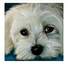 Maltese Dog Boy White Art Print different sizes available