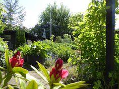 Fasters UrteHave: Tidlig sommer i haven