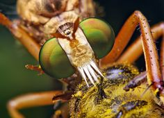 Macro Insect Photography by Thomas Shahan