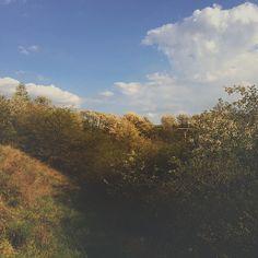 103/365 Fade VSCO landscape