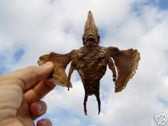 CREATURE CAUGHT AND IT'S BODY SOLD ON EBAY! This Angel or maybe Alien?, flew to me, of it's own free will, one cold day in November. REAL OR FAKE ~ YOU DECIDE.