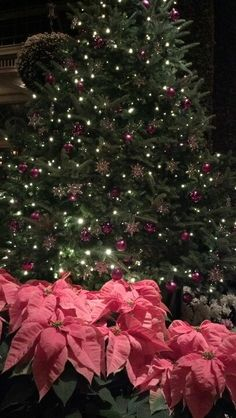 Longwood gardens Christmas light show <3