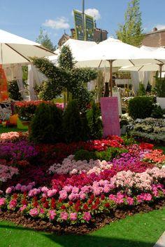 Feria de Botánica Insólita