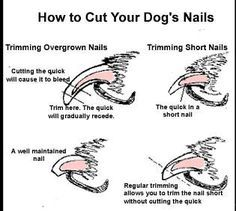 Cut dogs nails