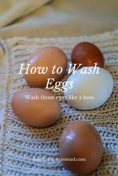 How to Wash Eggs