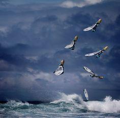#windsurf