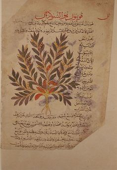 FROM THE ARABIC VERSION OF DIOSCORIDES' DE MATERIA MEDICA (this copy is known as Vignier-Densmore)