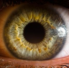 Google Image Result for http://bp.uuuploads.com/macro-photography-human-eye/eye-macro-photo-5.jpg