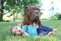 To je krásne! Najväčší pitbull na svete robí osobného strážcu bábätku | Najmama.sk