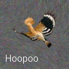 Hoopoe Brush