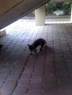 'Zabawa' w kotka i myszkę