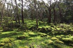 Ancient Indigenous aquaculture site Budj Bim added to UNESCO World Heritage list - ABC News (Australian Broadcasting Corporation) Carlton Gardens, Aqua Culture, Complex Systems, Stone Houses, Great Barrier Reef, A 17, Natural Wonders, World Heritage Sites, Aboriginal Education