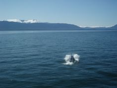 Whale Watching!- 2009