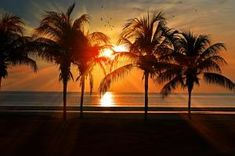 Beautiful Palm Trees Beach at Sunset Personalized Postcard Sunset Color Palette, Sunset Colors, Nikon D7000, Beautiful Sunset, Beautiful Places, Beautiful Scenery, Amazing Sunsets, Peaceful Places, Wallpaper Telephone