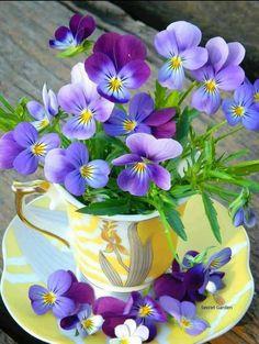 Tips On Sending The Perfect Arrangement Of Flowers – Ideas For Great Gardens My Flower, Purple Flowers, Flower Art, Flower Power, Beautiful Flowers, Simply Beautiful, Art Floral, Deco Floral, Orquideas Cymbidium
