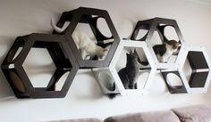 Com design criativo, camas de gato entretêm e decoram a casa