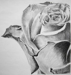 Pencil Drawings Of People Pencil Art Gallery Beautiful Scenery Drawing, Beautiful Flower Drawings, Pencil Drawings Of Flowers, Flower Sketches, Drawing Sketches, Drawing Flowers, Sketching, Rose Drawings, Rose Sketch
