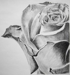This is the first time am doing a pencil art on flower category, i was very much impressed with my performance. Rose, considered to be queen of the flowers, no one in the world may say that they ha...