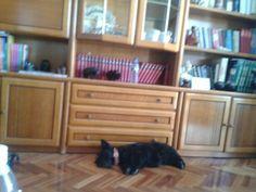 Tafi napping
