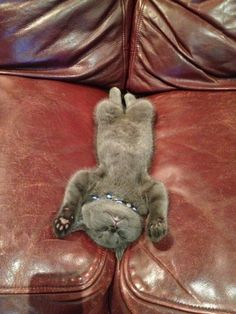 Silly cat #funnycat #funnycats