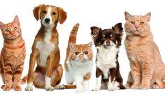 En Entre Ríos rige la ley de tenencia responsable de mascotas - InfoPalmares  https://t.co/G3IKL12TR5 https://t.co/lGz19Ezi9a