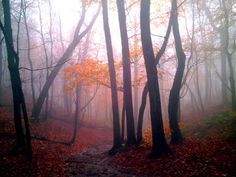 mist-woods-Richa Gupta