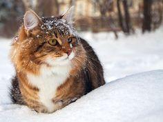 Winterspaß mit Katzen: So macht Kälte Spaß! - Seite 2