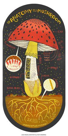 Die Anatomie einer Pilz-Kunstdruck von Rachelignotofsky auf Etsy poster The Anatomy of a Mushroom art print Arte Com Grey's Anatomy, Anatomy Art, Eye Anatomy, Mushroom Art, Mushroom Puns, Love Drawings, Drawing Faces, Art Drawings, Art Graphique