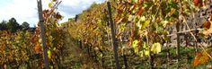 Bodegas Peique ∼ Bierzo ∼ Spanien - http://weinblog.belvini.de/bodegas-peique-spanien
