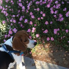 Never mind the flowers, I think I smell a squirrel!