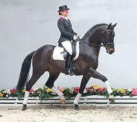 Sagnol - Sandro Hit x La Belle (Landadel) 2001  16.2 hh  Bay  Oldenburg