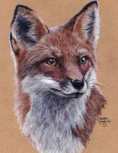 Fox by KristynJanelle on deviantART ~ colored pencils on recycled paper