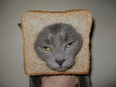 食パン猫07
