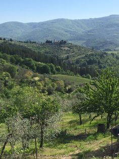 Vineyard, River, Mountains, Nature, Outdoor, Italia, Outdoors, Outdoor Games, Outdoor Living