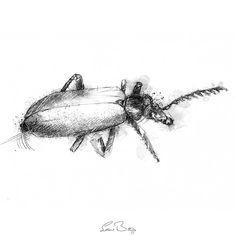 Sketch A Day, Beetle, Sketches, Drawings, Illustration, Prints, Art, June Bug, Art Background