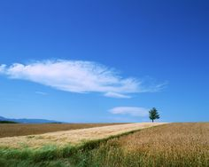 Blue and white wallpaper 7541 - Rural scenery - Landscape scenery